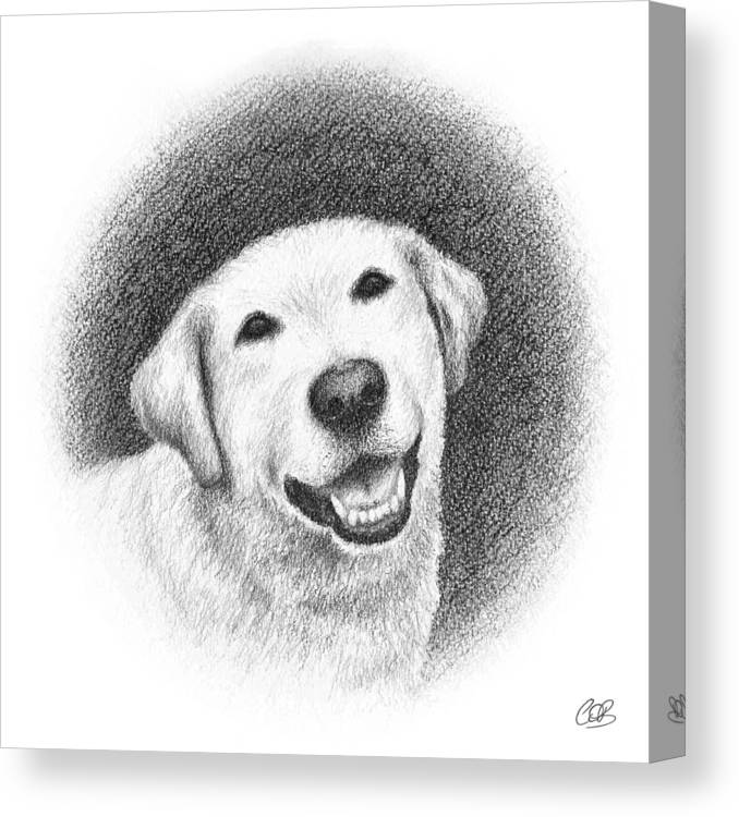 Phoebe Canvas Print featuring the drawing Phoebe by Conor O'Brien