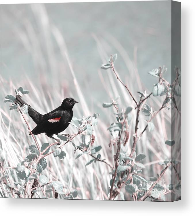 Bird Canvas Print featuring the photograph Proud Male by Aimelle