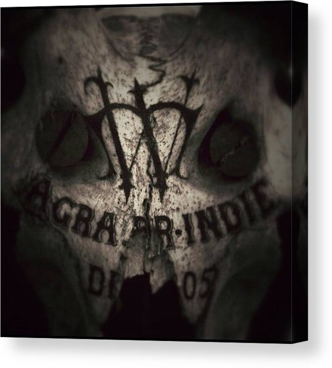 Sevendead Canvas Print featuring the photograph Skull by Dave Edens
