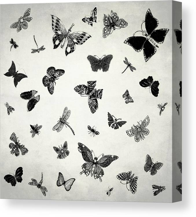 The Flutter And Fly Canvas Print