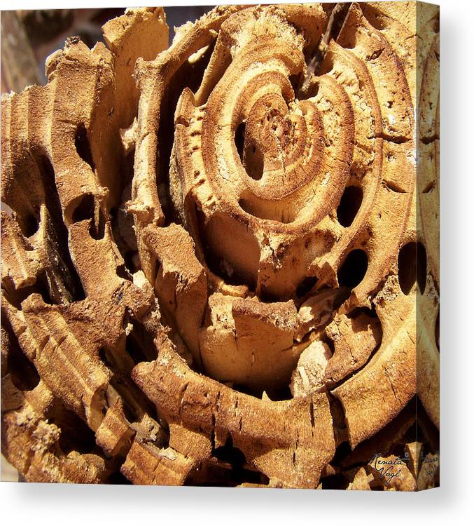 Wood Canvas Print featuring the photograph Wood by Renata Vogl