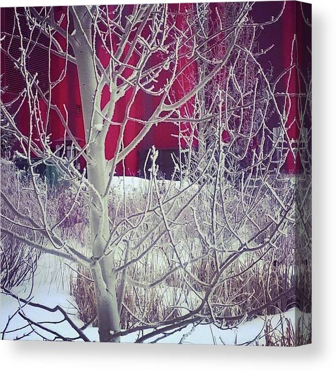 Winter Canvas Print featuring the photograph Frost by Johanna Wray