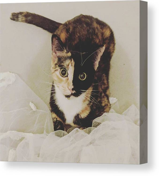 Cute Cat Canvas Print featuring the photograph Meet Star by Star And Ray