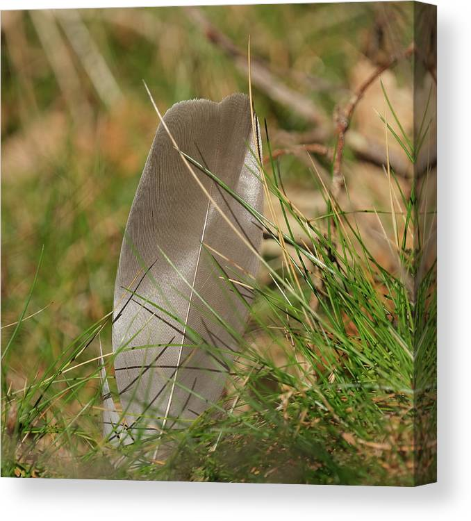 Sweden Canvas Print featuring the pyrography The Feather by Magnus Haellquist