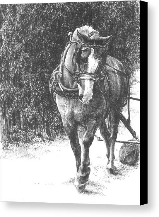 Horse Canvas Print featuring the drawing Powerful Grace by Barbara Widmann