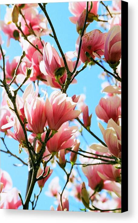 Spring Canvas Print featuring the photograph Spring Blossoms by Caroline Clark