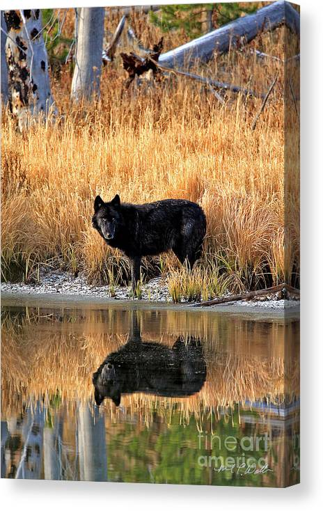 Wolf Canvas Print featuring the photograph Black Wolf Reflection by Michael Waller