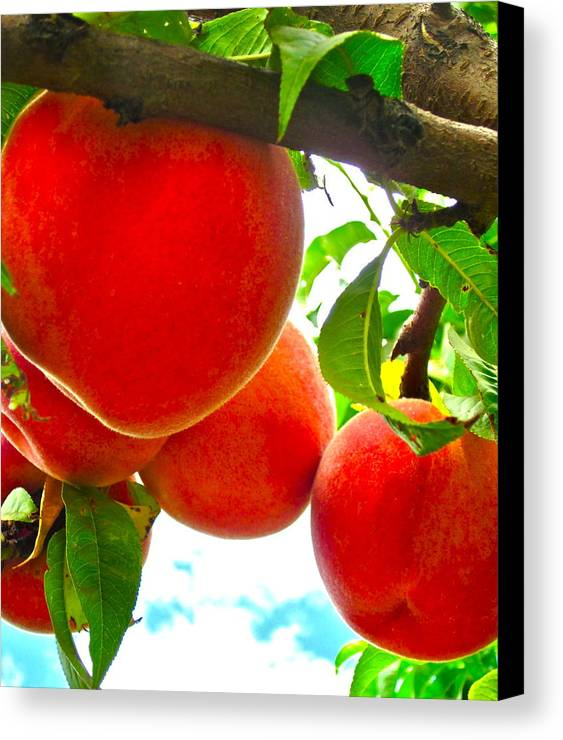 Photograph Of Peaches Canvas Print featuring the photograph Ready To Pick by Gwyn Newcombe