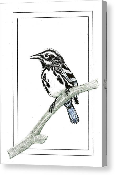 Canvas Print featuring the drawing Perched by Harry Richards