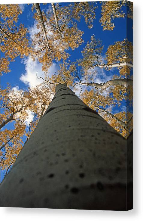 New Mexico Canvas Print featuring the photograph Aspen Sky by Troy Montemayor