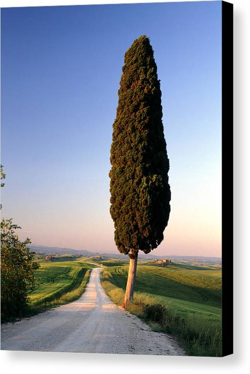 Italy Canvas Print featuring the photograph Lone Cypress by Michael Hudson