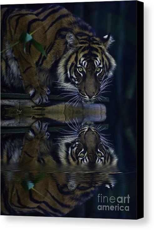 Sumatran Tiger Canvas Print featuring the photograph Sumatran Tiger Reflection by Sheila Smart Fine Art Photography