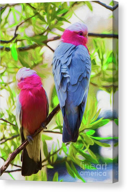 Pink Galahs Canvas Print featuring the photograph Pink Galahs 1 by Sheila Smart Fine Art Photography