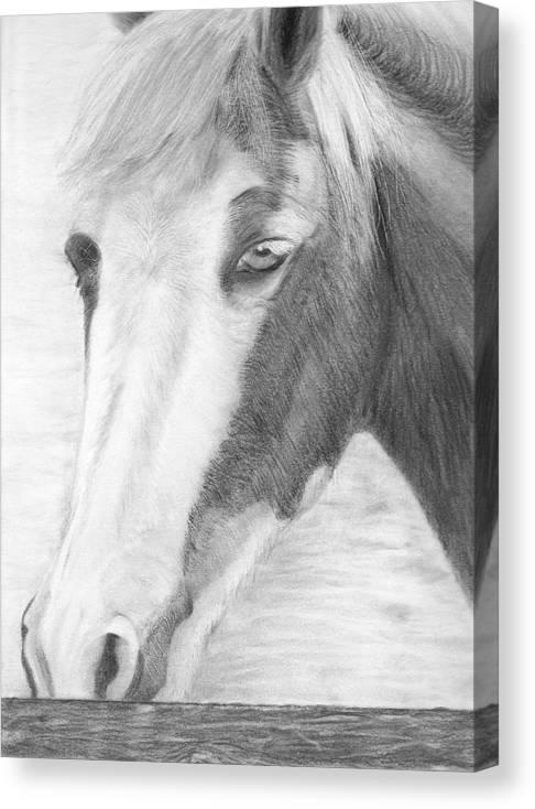 Horse Canvas Print featuring the drawing Sabrina by Karen Stitt