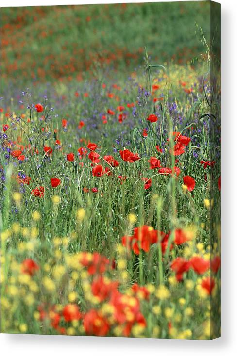 Flowers Canvas Print featuring the photograph Tuscan Wildflowers by Michael Hudson