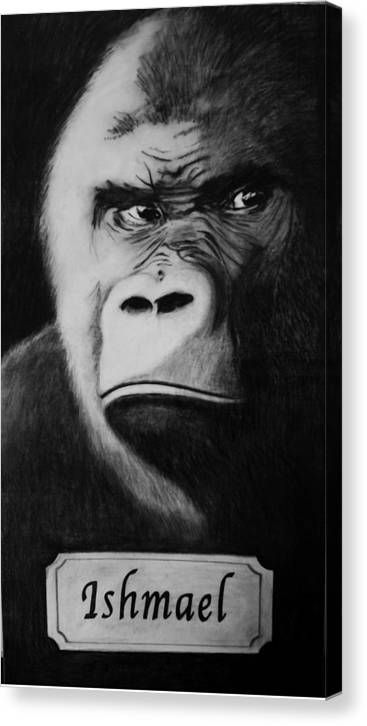 Gorilla Canvas Print featuring the drawing Ishmael by Elizabeth Comay