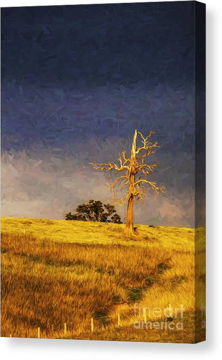 Lone Tree Canvas Print featuring the photograph Lone dead tree in paddock by Sheila Smart Fine Art Photography