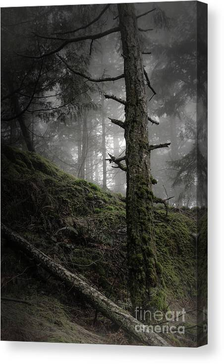 Nature Canvas Print featuring the photograph Beyond The Ridge by David Hillier