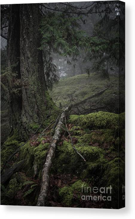 Trees Canvas Print featuring the photograph Fallen by David Hillier