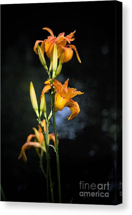 Lily Monet Garden Flora Canvas Print featuring the photograph Lily in Monets Garden by Sheila Smart Fine Art Photography
