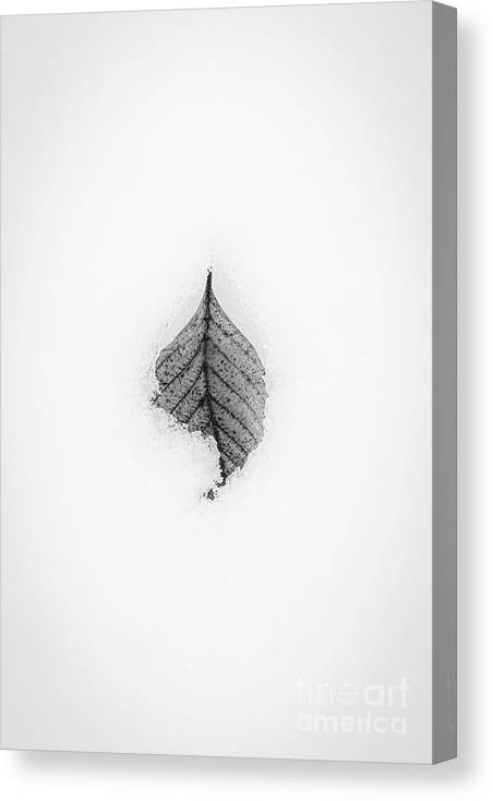 Winter Canvas Print featuring the photograph Winter Leaf by David Hillier