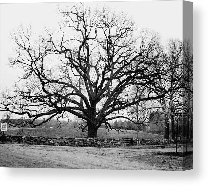 Exterior Canvas Print featuring the photograph A Bare Oak Tree by Tom Leonard