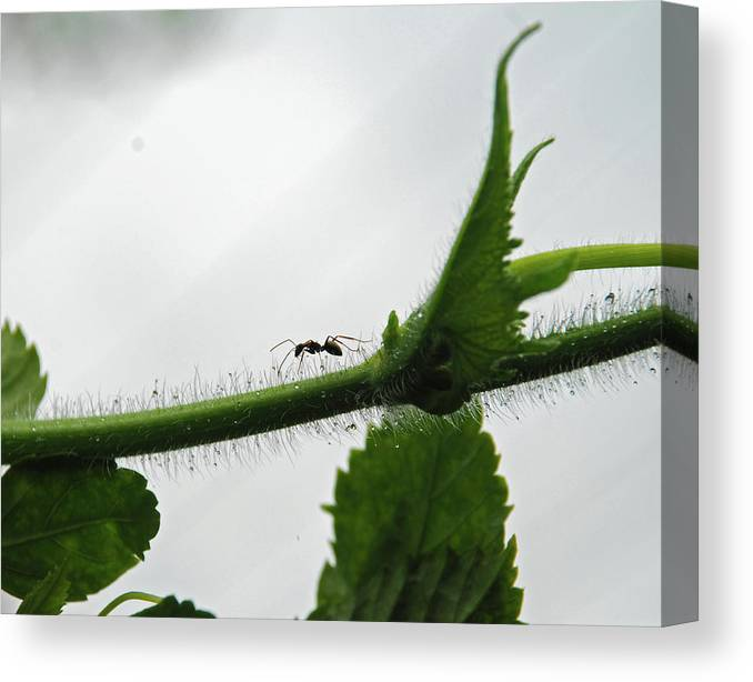 Insect Canvas Print featuring the photograph A Bugs Life by Gopan G Nair