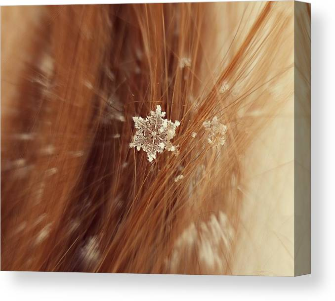 Winter Canvas Print featuring the photograph Fallen Flake by Candice Trimble