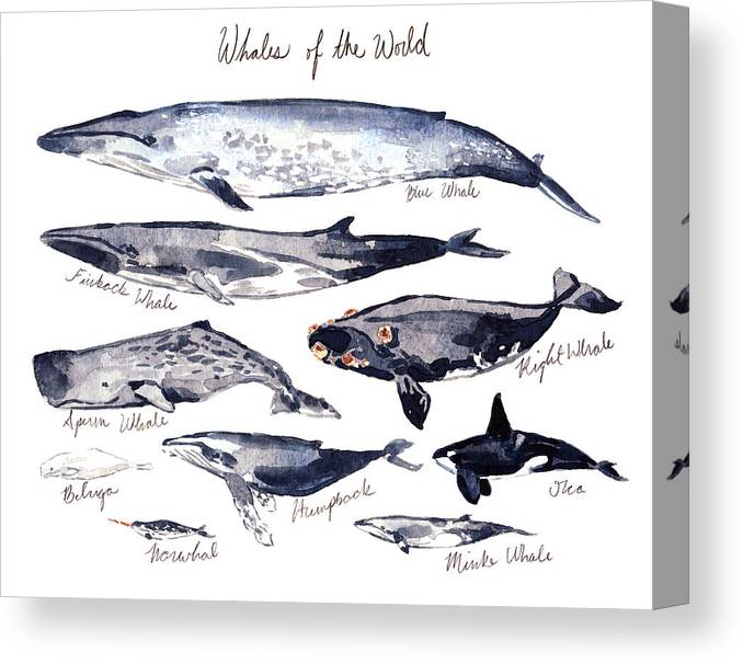 Whales Of The World Canvas Print Canvas Art By Laura Row