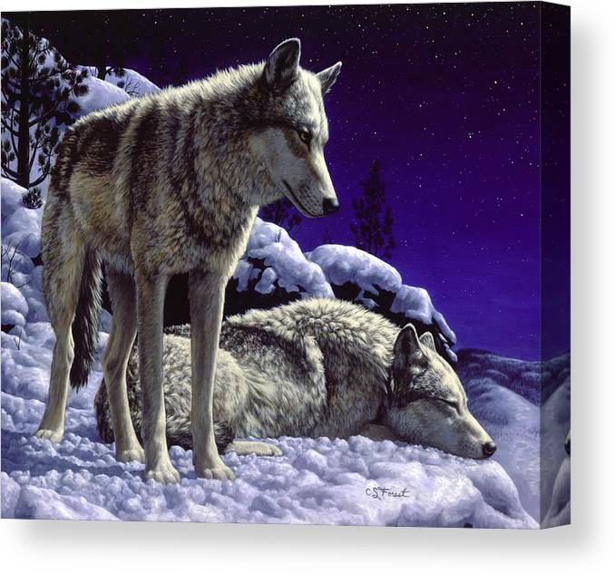 Wolf Canvas Print featuring the painting Wolf Painting - Night Watch by Crista Forest
