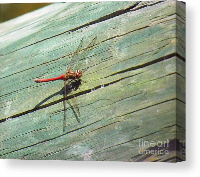 Damselfly Canvas Print featuring the photograph Damselfly ready for liftoff by Rrrose Pix