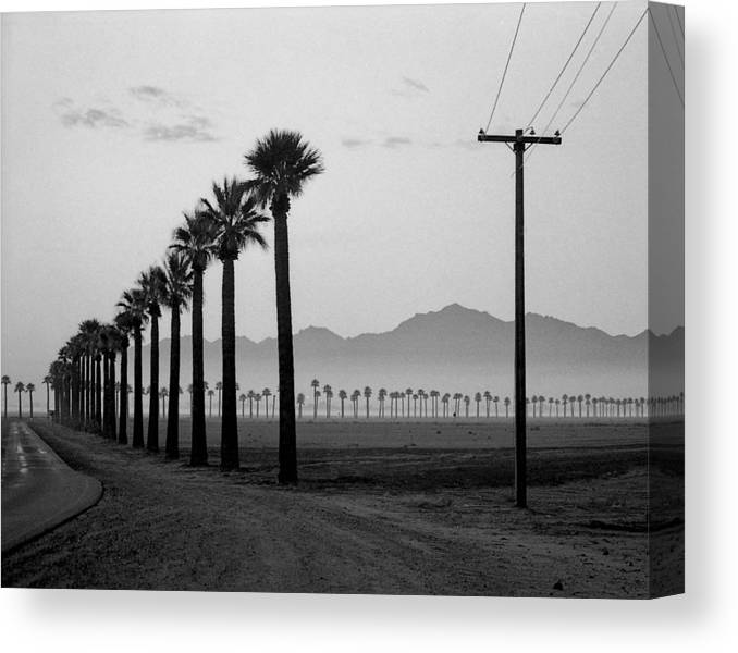 Palms Canvas Print featuring the photograph Litchfield Road by Jim Painter