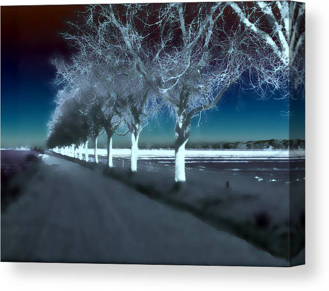 Trees Canvas Print featuring the photograph Pecan Trees by Jim Painter