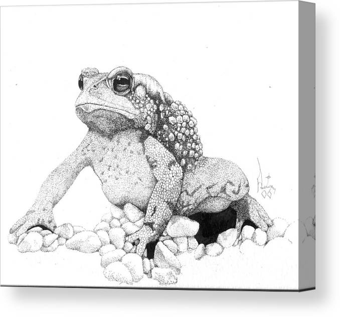 Toad Art Toads Reptile Artist Toad Stool Toader American Spadefoot Canvas Print featuring the drawing Bufo Americanus by Preston Shupp