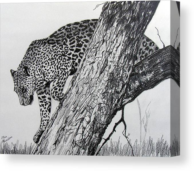 Jaquar Canvas Print featuring the drawing Jaquar in Tree by Stan Hamilton