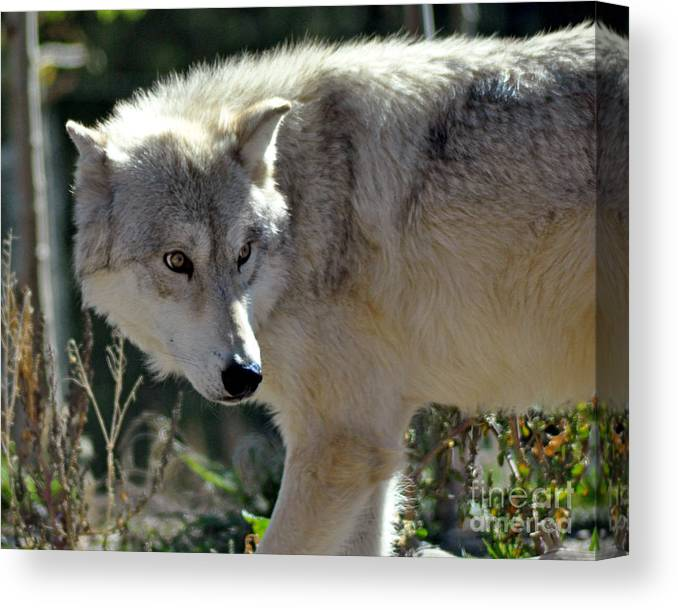 Diane Berry Canvas Print featuring the photograph Amber Eyes by Diane E Berry