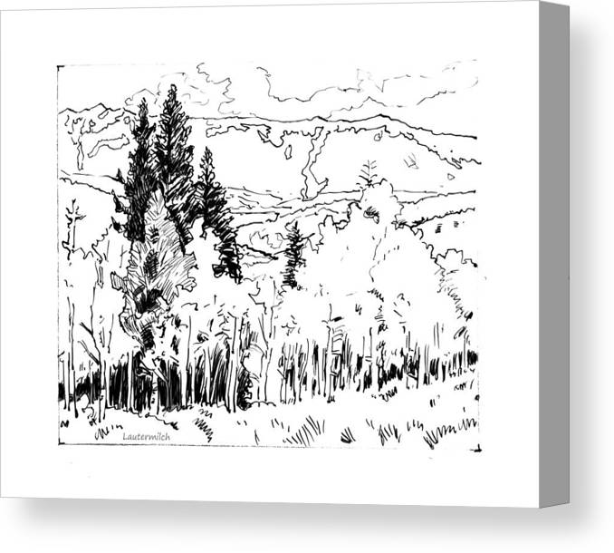 Aspens Canvas Print featuring the drawing Aspens Against the Evergreens by John Lautermilch