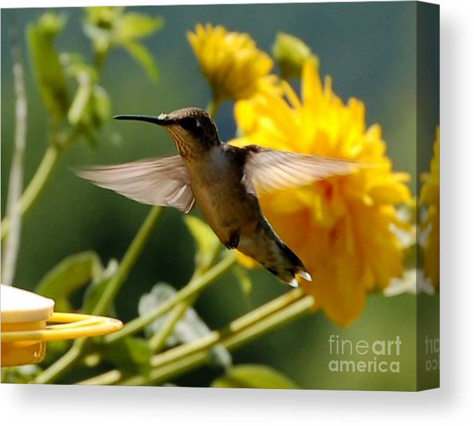 Diane Berry Canvas Print featuring the photograph Hummer by Diane E Berry