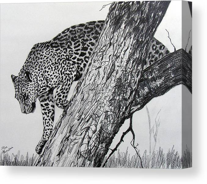 Original Drawing Canvas Print featuring the drawing Jaquar In Tree by Stan Hamilton