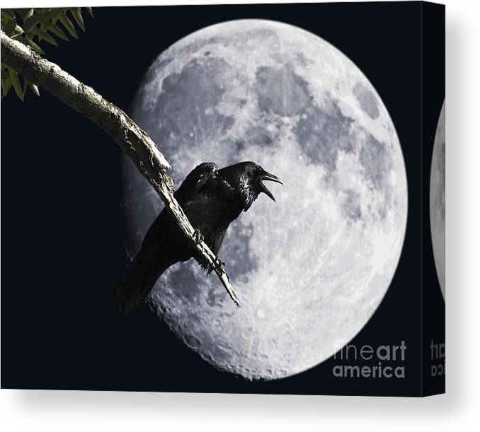 Wingsdomain Canvas Print featuring the photograph Raven Barking at the Moon by Wingsdomain Art and Photography
