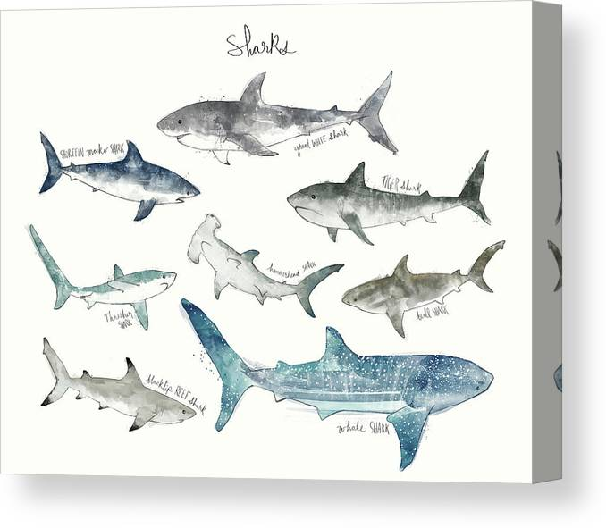 Sharks Canvas Print featuring the painting Sharks - Landscape Format by Amy Hamilton