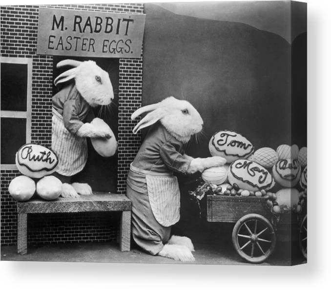 Stuffed Canvas Print featuring the photograph Bunny Business by Frees