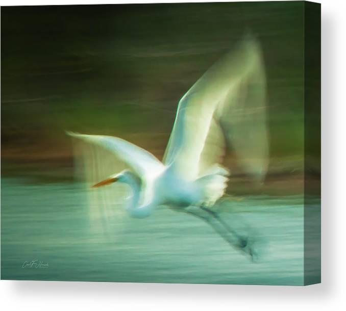 Galveston Canvas Print featuring the photograph Fly Away by Carol Fox Henrichs