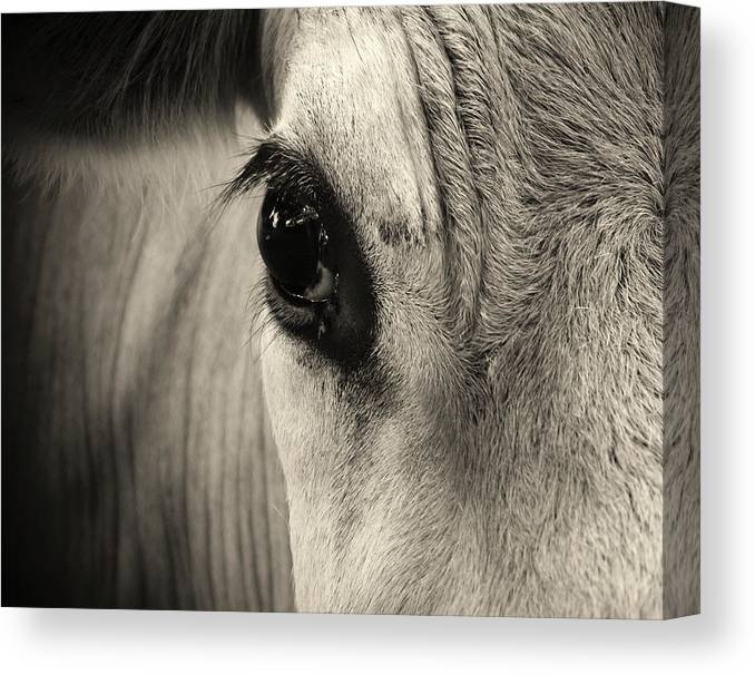 Horse Canvas Print featuring the photograph Horse Eye by Karena Goldfinch