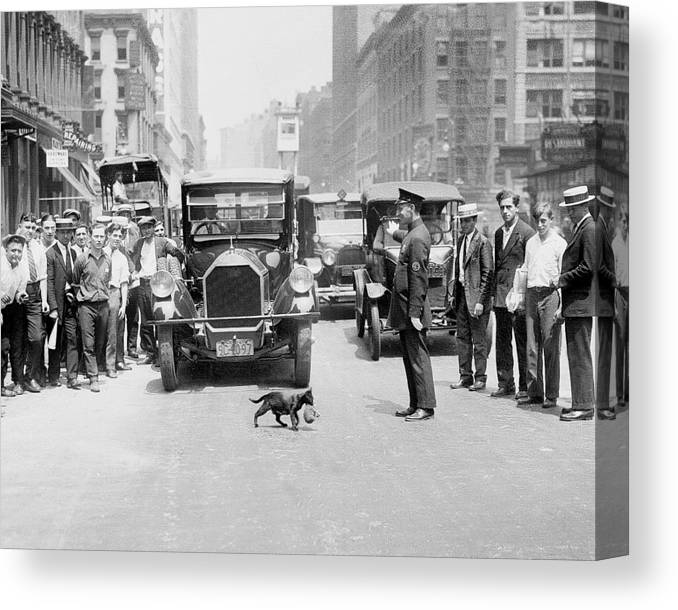 Kitten Canvas Print featuring the photograph Mother Cat Blackie Halts Traffic As She by New York Daily News Archive