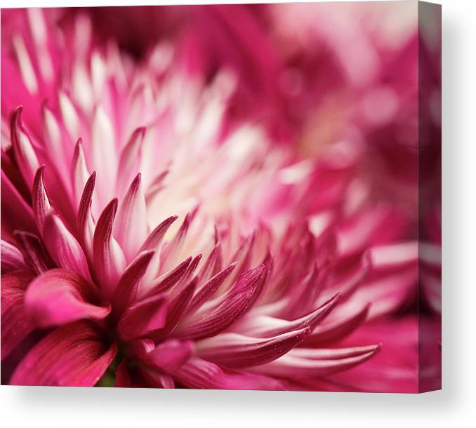 Petal Canvas Print featuring the photograph Poised Petals by Jody Trappe Photography