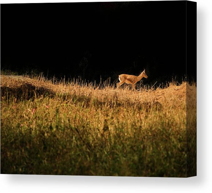 Grass Canvas Print featuring the photograph The Lonely Deer by Arindam Sen Photography