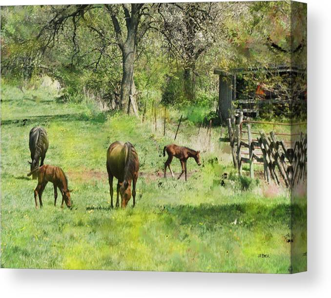 Spring Colts Canvas Print featuring the digital art Spring Colts by John Robert Beck