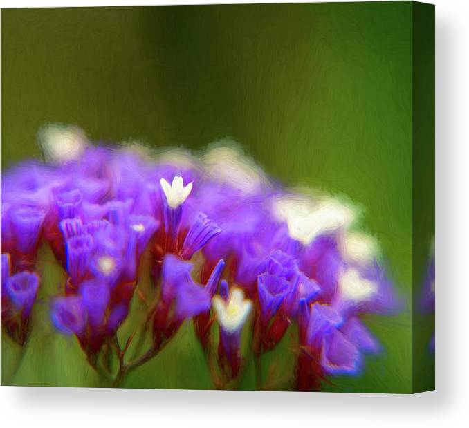 Statice Canvas Print featuring the photograph Statice In The Garden by Lindsay Thomson