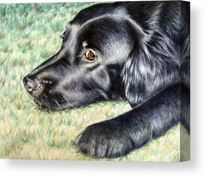 Dog Canvas Print featuring the painting Flat Coated Retriever by Nicole Zeug